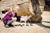 Camping Domaine de Léveno,  mini ferme chèvre