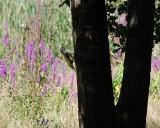 pic-vert-juliettemartin-1393267