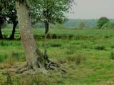 Prairie à l'Ouest de la butte de l'Ilette