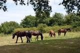 Ti Dear - Chambres d'hôtes à Saint-Molf en Brière - accueil chevaux