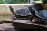 Tropicarium - tortues - La Baule
