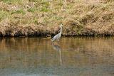 trugatu-oiseaux