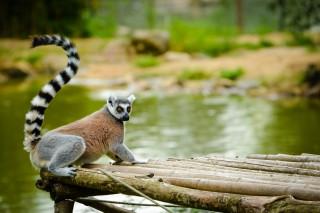 01 - Parc animalier & botanique et Parcabout® de Branféré