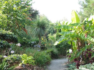 01 - Tropicarium bonsaï