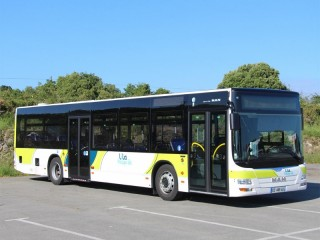 bus-lila-1222647