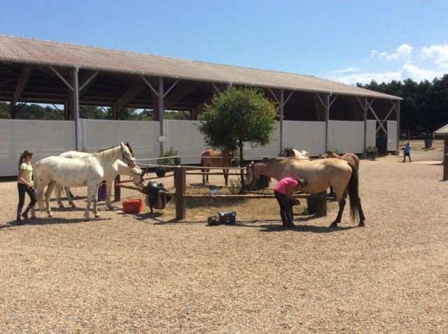 01 - Domaine Equestre de Quérélo - Guérande