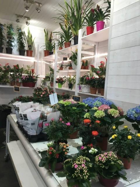 Fleuriste La Halles aux Fleurs Le Pouliguen