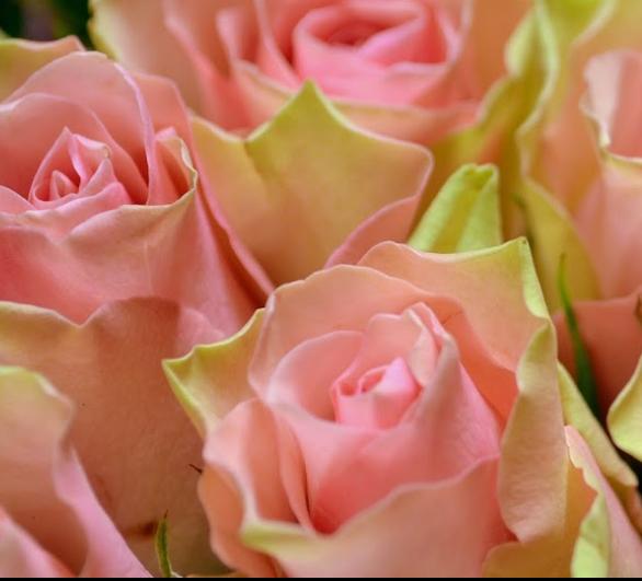 Fleurs en couleur - Guérande