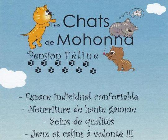 Les Chats de Mohonna - Saint-Molf