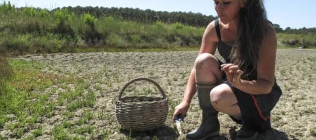 Les Douceurs du Marais - La Turballe