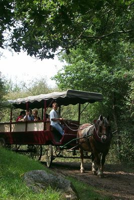 La calèche, un moyen ludique de découvrir les villages de chaumières et les traditions d'autrefois