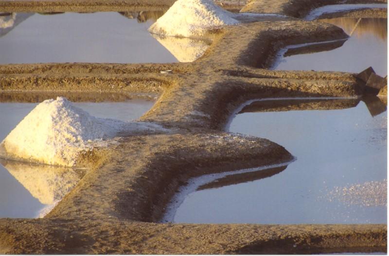 mulons-de-sel-dans-les-marais-walter-501025