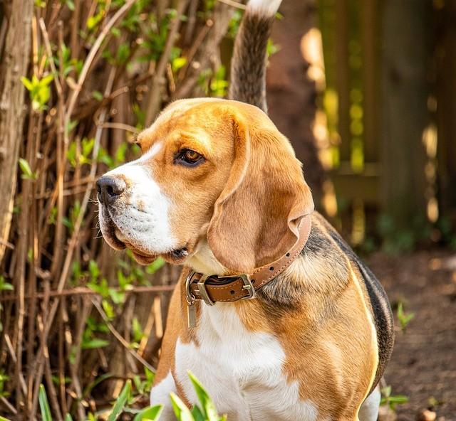 Pension canine l'arche de Lily