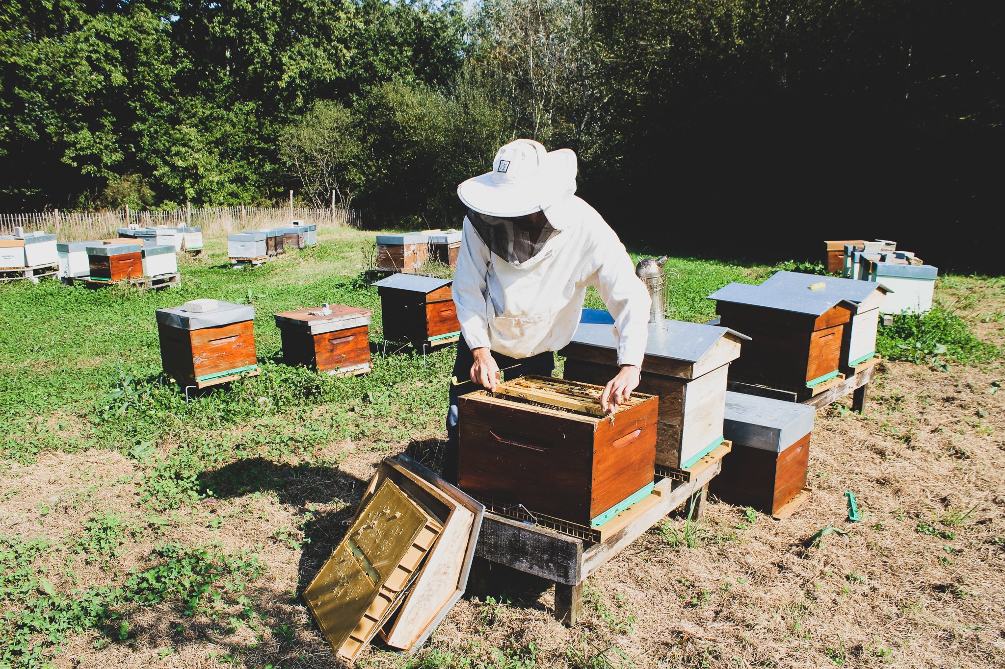 Blog-La Ferme de Kerhué, du miel et des abeilles à Mesquer ! - © OTI-LBPG