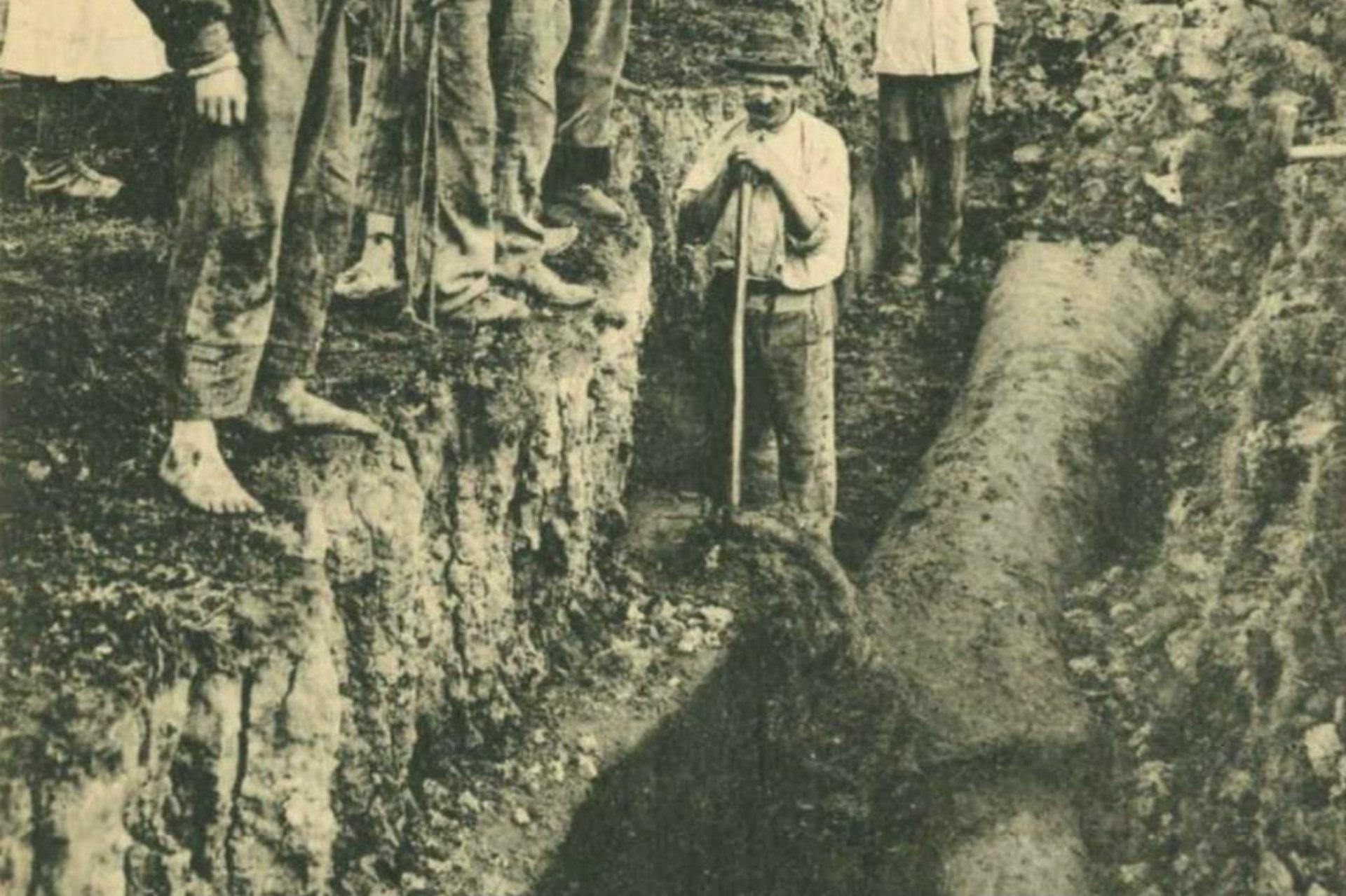 Découverte d'un arbre lors de la coupe de la tourbe - © Détail d'une carte postale début 20e