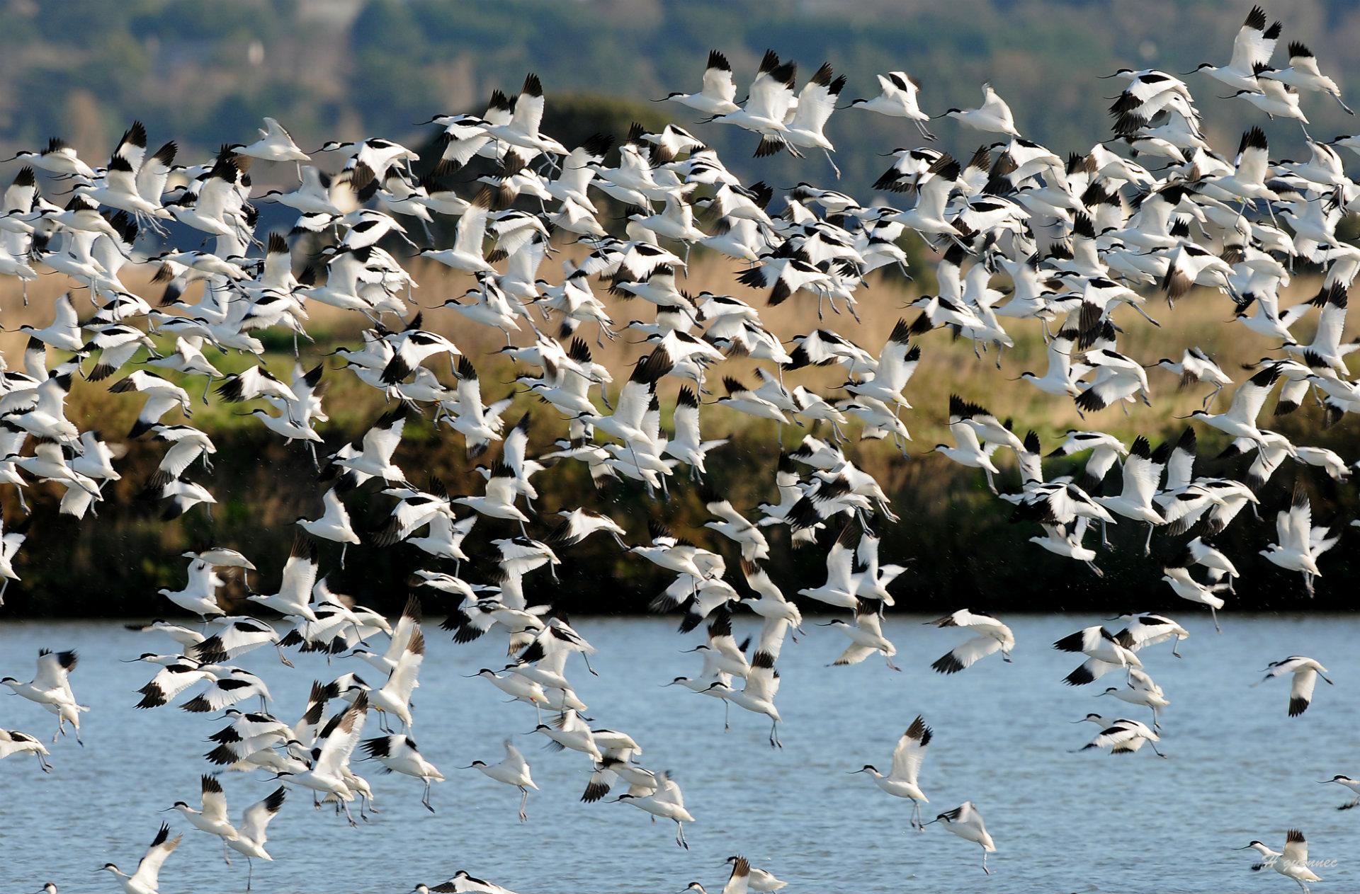 Birds of Rostu - © H. Guennec