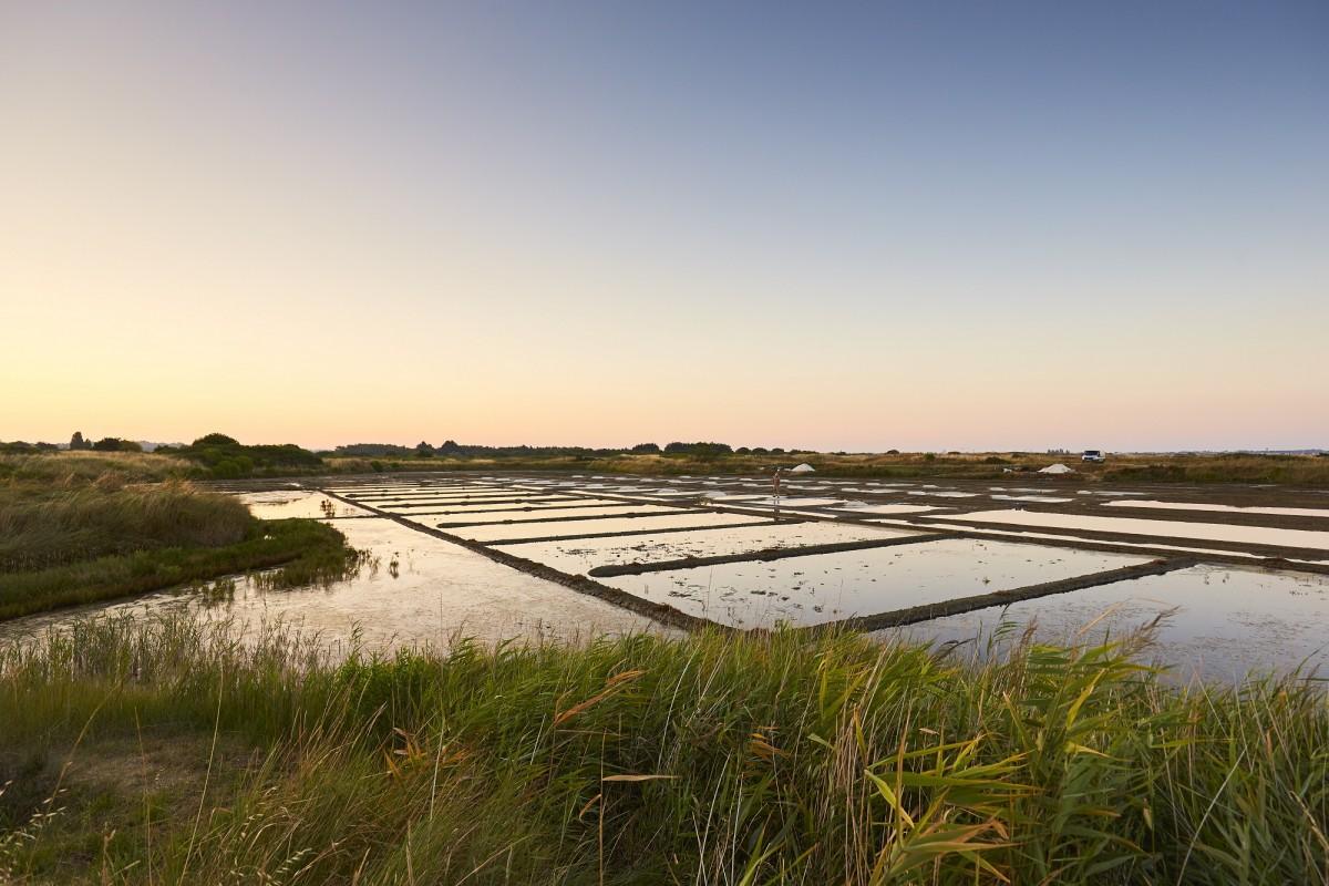 Les marais salants de Guérande au soleil couchant - Alexandre Lamoureux