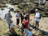 Sorties Algues - Piriac-sur-Mer - OT La Baule-Presqu'île de Guérande