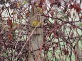 Balisage caché par la végétation
