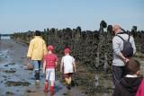 Mer et nature : visite guidée parc à coquillages