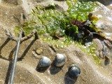 Sorties Estran - Mesquer - OT La Baule Presqu'île de Guérande