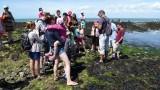 Piriac-sur-Mer - Sortie découverte des algues