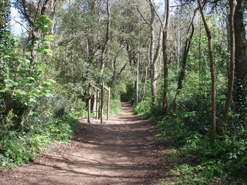 Forêt d'Escoublac - La Baule