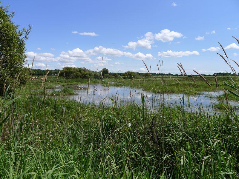 Les prairies humides - Crédit photo : J.Sanson