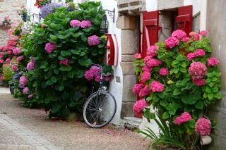 ruelle-des-mouettes-2-800x533-1158493