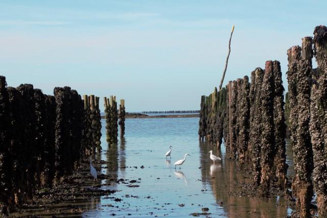Blog - A la découverte de la conchyliculture en baie de Pen Bé à Assérac