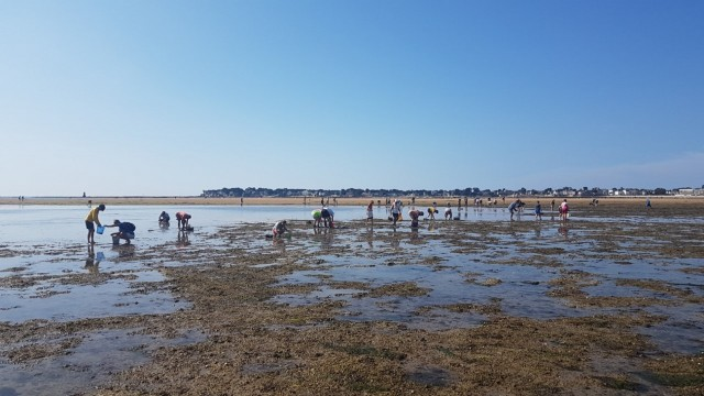 Blog-Les joies de la pêche à pied au Pouliguen
