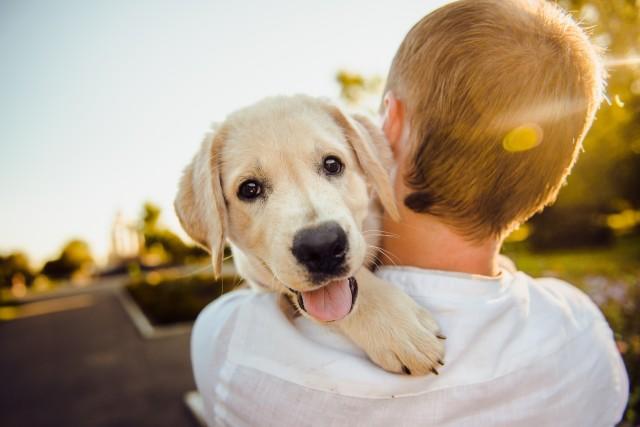 chien-image-parhelena-sushitskaya-de-pixabay-1372385