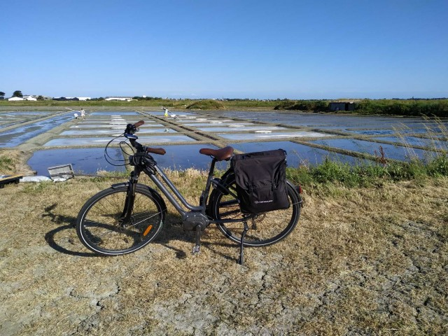 Bike ride in the salt marshes