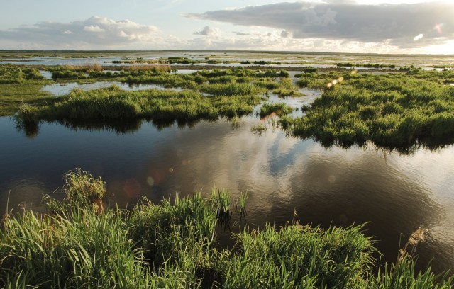 The marshes of Brière