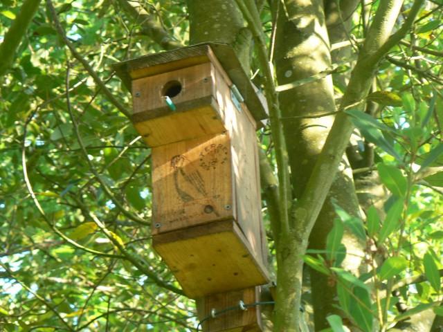 Accueillir la biodiversité dans son jardin : nichoirs à oiseaux