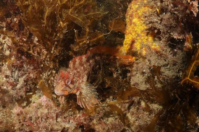 Plongée Piriac sur Mer