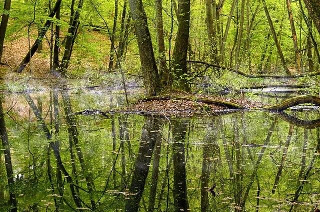 Sortie nature : au bord d'un ruisseau CPIE Loire Océane