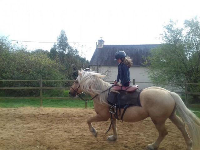 Stage multi-activités : voltige cosaque et équitation
