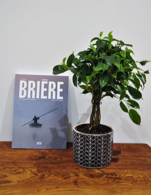50 ans en Brière - Editions 303