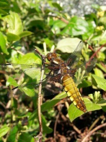 Découverte des libellules et papillons
