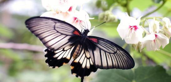 Exposition itinérante sur les papillons - Saint-Joachim