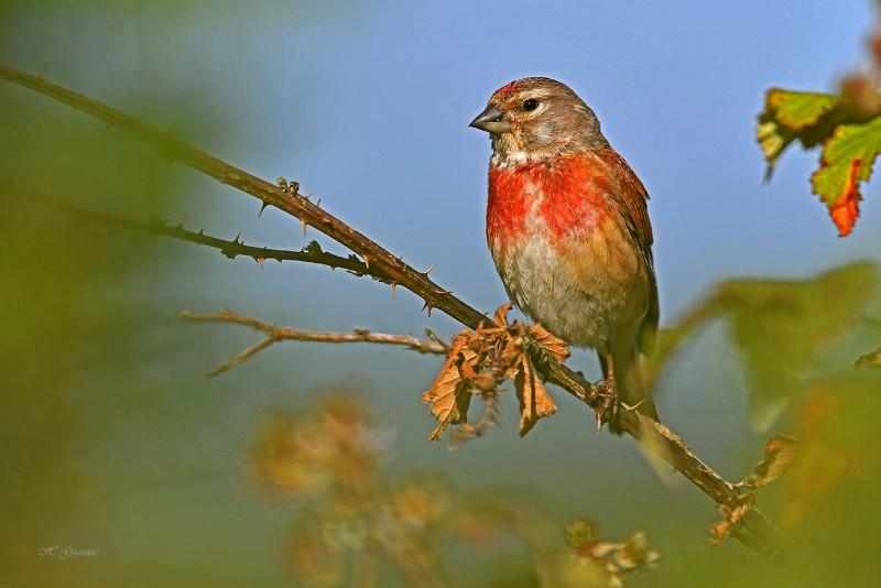 mesquer-19juillet-diaporama-oiseaux-credit-henri-guennec-1809818