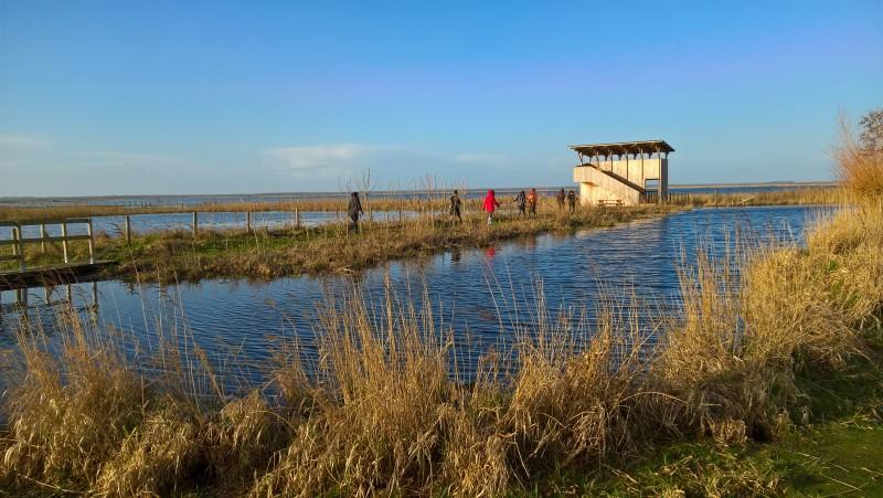 observation-des-oiseaux-reserve-pierre-constant-office-de-tourisme-la-baule-presqu-ile-de-guerande-42-1344627