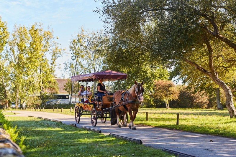 Saint-Lyphard - L'Arche Briéronne - Barge trip and horse-drawn carriage ride - 1h30
