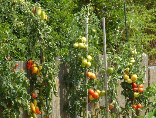 Stage - Créer un jardin comestible