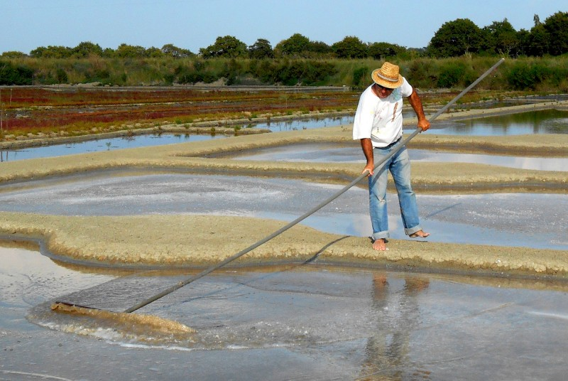 Sortie découverte des marais salants sur la saline de Nicolas Arnould dans le bassin du Mès à Mesquer